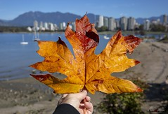 The Beginning Is The End Is The Beginning (Clayton Perry Photoworks) Tags: vancouver bc canada fall autumn explorebc explorecanada leaves skyline