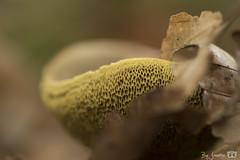 DN9A5830 (Josette Veltman) Tags: herfst autumn bos forest vechtdal overijssel