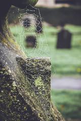 IMG_5606.jpg (keithr™) Tags: abbey glen autumn leaves dunfermline scotland unitedkingdom gb