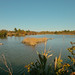 pond at Reifel Bird Sanctuary