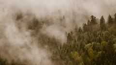 Magic forest (Jean-Luc Peluchon) Tags: fz1000 sapin fir forest forêt arbre tree montagne mountain autumn automne pyrénées bois woods nuage cloud mist brouillard brume haze fog landscape paysage yinyang mystery espagne spain españa
