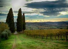 Per arrivare a Strozzavolpe (antonella galardi) Tags: toscana siena poggibonsi strozzavolpe 2018 autunno vigna campagna cipressi