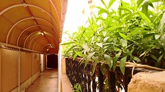 040 (AbdulRahman Al Moghrabi) Tags: reception hotels hotel jiddah jeddah فندق فنادق جدة