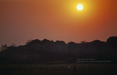 near Nong Khai, Sunset - Explore (blauepics) Tags: thailand east nong khai scenery landschaft landscape thai trees bäume field felder agriculture landwirtschaft red rot orange sunset sonnenuntergang sun sonne explore