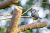 Garden Bird-1128