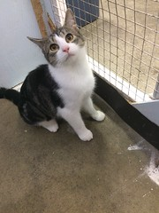 Crunchie - 10 month old neutered male