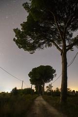 Il cielo stellato (Francesco Collina) Tags: nikkor 20mm 28 ais nikon sonya7sii maremma grosseto