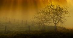 (Feans) Tags: sony a7r a7rii ii fe fog mist neboa carcacia lampai teo padron galiza galicia 100400 gm
