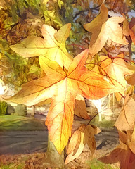 Autumn Leaf (PDX Bailey) Tags: post process processing processed dreams dream generator season favorite fall leaf leaves beautiful
