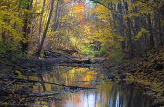 Moment (RdeUppsala) Tags: creek arroyo stream autumn höst otoño agua árboles bosque skog forest trees träd vatten water uppland uppsala sverige suecia sweden naturaleza nature natur paisaje landscape landskap luz light solljus fall