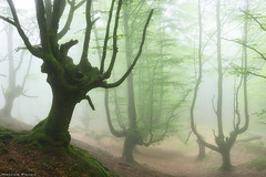 Legends of the Forest (Hector Prada) Tags: forest bosque spring primavera fog niebla mist bruma tree árbol mood atmósfera idyllic shadows enchanted creepy leaves hojas nature naturaleza paísvasco basquecountry