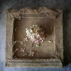 charm of tenderness (Button-NK) Tags: tenderness canvas flowers hydrangea stilllife