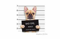 BAD GIRL MALU, Frenchie Print Patch zum aufbügeln (patchmonkeys) Tags: patch bügelbild style applikation aufbügler print druck design hund transfer frenchie bulldogge
