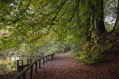 Autumn in Essen | Ruhr | Germany (*Photofreaks*) Tags: adengs wwwphotofreakseu woods forests wald wälder essen ruhr ruhrgebiet deutschland germany nordrheinwestfalen northrhinewestphalia nrw bokeh nachtigallental autumn herbst fall