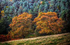 Autumn Splendour (Missy Jussy) Tags: autumn colourful trees england valley piethornevalley landscape lancashire saddleworth hillside field seasonal canon5dmarkll canon5d canoneos5dmarkii 70200mm ef70200mmf4lusm ef70200mm canon70200mm outdoor outside october 2018