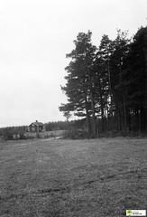 tm_5603 (Tidaholms Museum) Tags: svartvit positiv natur byggnad exteriör stuga skog