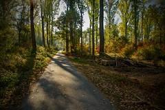 wlk through the autumn (tucsontec) Tags: autumn herbst herbstfarben outdoor wald wandern forest colours gegenlicht lichtstimmung baum bäume trees way weg laub leaves holz pfad forst