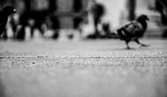 cross the line (Fearghàl Nessbank) Tags: nikon d700 blackwhite monochrome mono art