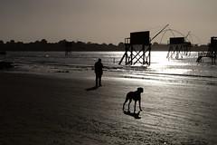 L' homme et son plus fidèle ami (LUMEN SCRIPT) Tags: lowkey light shadow silhouette man dog backlight beach twilight water ocean candid evening