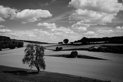20180922-DSC_0992-2 (ohschroeg) Tags: blackandwhite blackwhite autumn fields tree clouds landscape