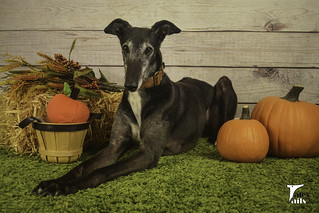 Fall Harvest -- Tales and Tails