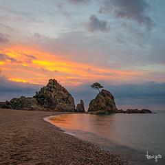 Steven's Tree (toniyoo) Tags: landscapephotography landscape paisaje sunrise tossademar seascape sea beach orange catalunya longexposure reflection cloudysky perfectsky