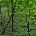 Somewhere Amongst the Green Foliage of a Forest of Trees (Mammoth Cave National Park)