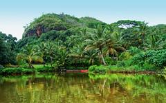 A Tropical Rainforest on the Hawaiian Island of Kaua'i (Gail K E) Tags: hawaii kauai tropical rainforest beautiful usa wailuariver