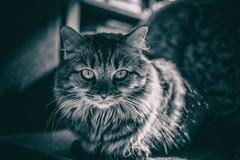 ö-ö (_elusive_mind_) Tags: blackandwhite bw cat cats katze katzen