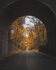 Golden Gateway (tylerjacobs) Tags: sony a6000 sigma 16mm f14 leaf leaves foliage fall autumn orange red color cold cool illinois enjoy elkhart il