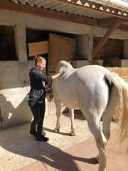 caen horses9 (APIabroad) Tags: horses travel caen france apiexcursions excursions apistudyabroad studyabroad