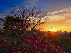 X10_DSCF5440_ON85 (A. Neto) Tags: x10 fujifilm color sunset skyline sky sun flowers people landscape golden tree trees clouds