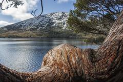 Cradle Mountain National Park (Leonardo Del Prete) Tags: tasmania australia cradlemountainnationalpark cradlemountain tree albero lago lake
