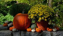 Pumpkins & Mums (davidwilliamreed) Tags: pumpkins chrysanthemums colorful fall autumn atlantabotanicalgarden atlantaga fultoncounty