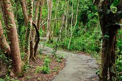 Gumbo-limbo Trail (J-Fish) Tags: gumbolimbo burserasimaruba forest trail path gumbolimbotrail everglades evergladesnationalpark nationalpark park unesco unescoworldheritagesite florida d300s 1685mmvr 1685mmf3556gvr