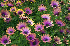 Nature's Colour Palette (duobel) Tags: garden flowers blooms petals colour pattern nature
