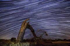 Árbol caído (franlaserna) Tags: nature fall árbol longexposure startrail tree nikon nightphotography night stars