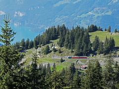 RD18966.  SPB nearing the summit. (Ron Fisher) Tags: spb schynigeplatterbahn rackrailway rail railway railroad eisenbahn chemindefer schmalspurbahn voieetroite narrowgauge narrowgaugerailway train transport publictransport zahnradbahn schweizerischeeisenbahnen schweiz dieschweiz lasuisse suisse switzerland swissrailways railwaysofswitzerland