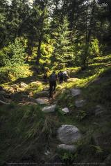 Jungle Hike (AQAS.Clicks) Tags: landscape pakistan nature trekking photography ngc travelpakistan beautifulpakisan travel canon perspective moments natureshots naturephotography naturelovers scenery aqas mkm musakamusala kpk jungle trees junglehike hiking friends