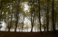 Laiñotsu 1 (juan luis olaeta) Tags: fog foggy paisajes landscape bosque basoa forest nieblas laiñoa pagoa nature contraluz fujifilmxpro1
