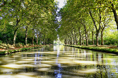 Canal du Midi (erichudson78) Tags: france midipyrénées canaldumidi eau water reflets reflection arbre tree canonef24105mmf4lisusm canoneos6d grandangle wideangle occitanie canal perspective