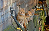 Autumn cats 😍 Finland 2018. (L.Lahtinen (nature photography)) Tags: cats kittens family cute adorable animals nature nikond3200 nikkor55300mm naturephotography cuties funny suomi kissat luonto syksy pennut fallcolors antistress sweet pretty light outside cutie curious cutest autumncolors fall orange golden 2dwf foliage gingercats finland autumn
