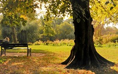 The Bench and the Old Tree (Clare-White) Tags: bench green trees vondel amsterdam sitting big