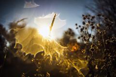 Het is herfst:de blaadjes vallen./It's fall,the leaves are falling. (look to see) Tags: herfst fall flare bokeh vintagelens topcorreauto128f35cm leaves leaf bladeren blad magic delaak beek bree belgium 2018 sunrise zonsopkomst koud cold warm