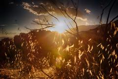 Sunset at Lake Piru, California 2018 (MKhaustova) Tags: sunset nature landscape mountains hills sun sky