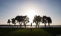 San Diego-21 (LTL78) Tags: sandiego california usa fujifilm x100t bay sunset tree arbol night