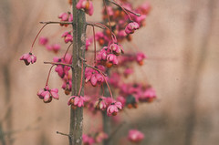 e-lias-ICC_6072-Edit (e-lias hun) Tags: nikon d7000 5018d closeup pattern color bokeh pink flower