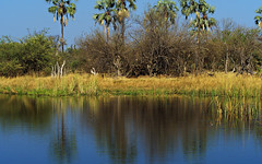 Delta shoreline (nisudapi) Tags: 2018 africa botswana okavango delta okavangodelta landscape river lake reflection shore water