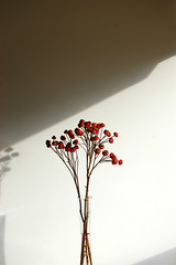 Rosehip (rachael_lea) Tags: flower flowers nature rosehip autumn twigs branches berries fall