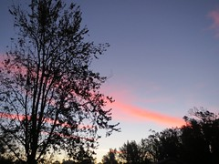 Thursday Morning Sky. (dccradio) Tags: lumberton nc northcarolina robesoncounty outdoor outdoors outside nature natural sky color colorful pink contrail bluesky morning morningsy goodmorning thursday thursdaymorning fall autumn november tree trees treebranches brach branches treebranch treelimb treelimbs beauty pretty scenic silhouette canon powershot elph 520hs
